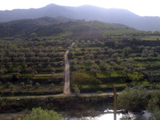 Priorat_hillside(1)