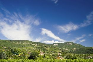 Vineyards_in_Valpolicella