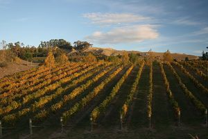 800px-HB_Vineyard_autumn