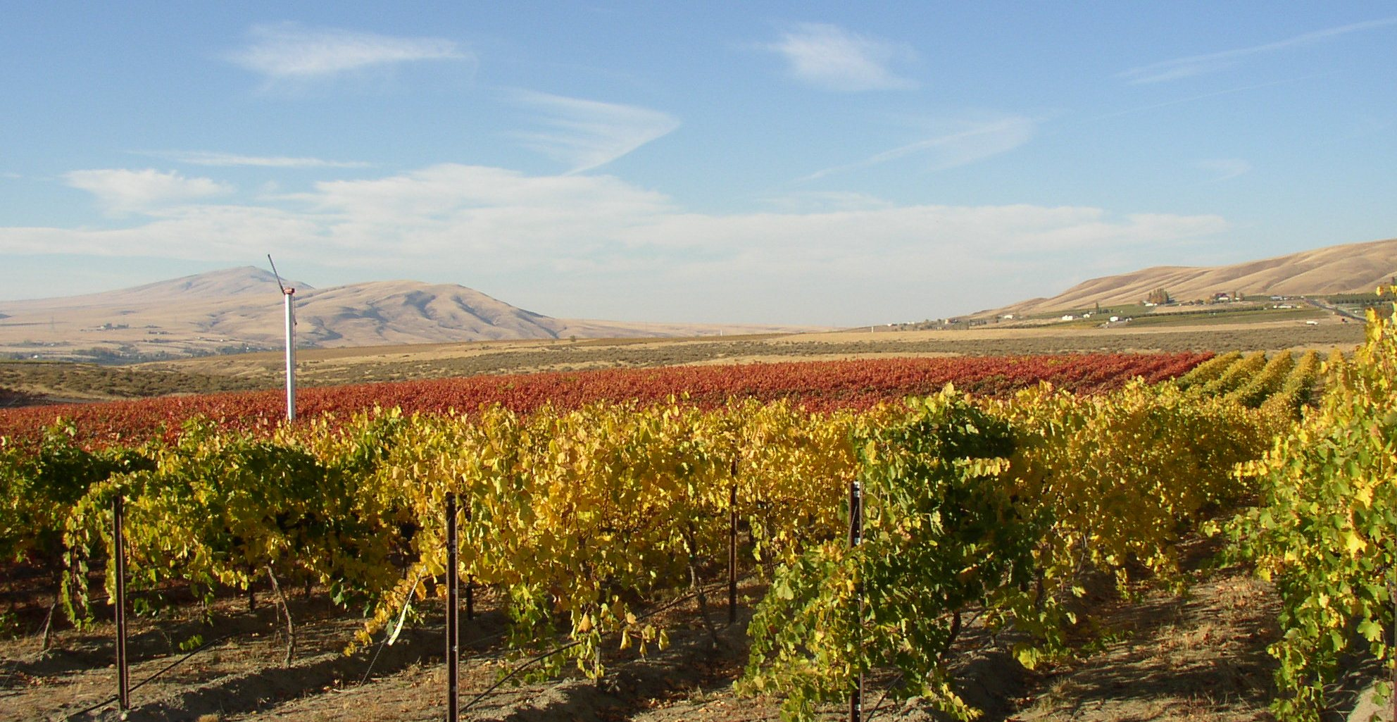 Red Mountain_Washington_Kiona vineyard