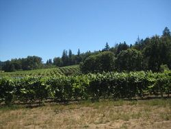 Patz and Hall vineyard1