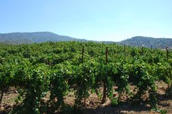 Vineyard-federick-1-sm
