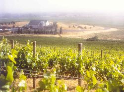 Vineyards%20looking%20down%20to%20SCHUG%20winery