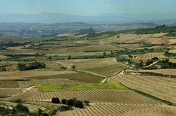 Rioja_vineyards